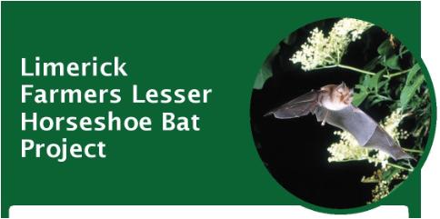 Limerick Farmers Lesser Horseshoe Bat Project